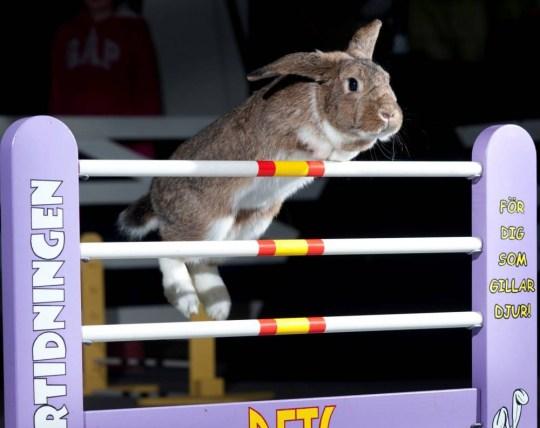(Picture: London Pet Show)