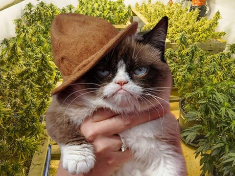 Woman calls police after cat brings home a bag of cannabis