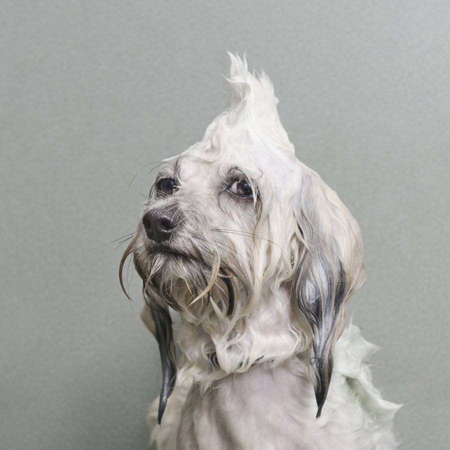 Rejoice at these pictures of dogs at bath time