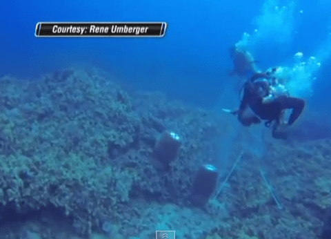 Underwater scuba attack caught on camera