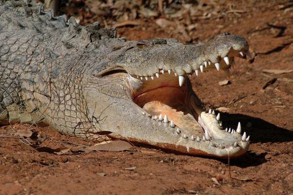 Melas Mero: Boy, 11, eaten by crocodile in Papua New Guinea