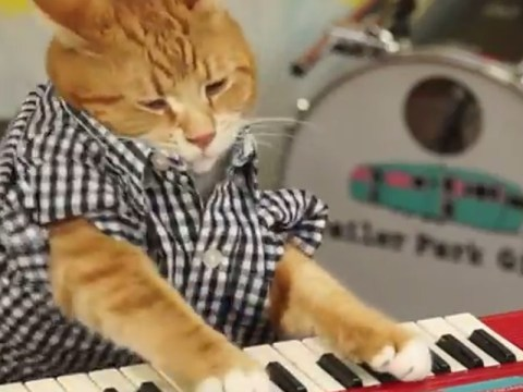All hail the return of internet legend Keyboard Cat, seven years after his original online debut