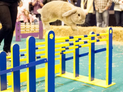 From micro pig herding to rabbit show jumping: 10 pictures which prove that the London Pet Show is the best thing EVER