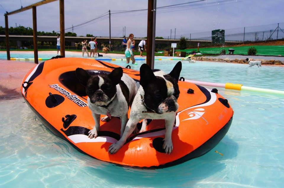 Who let the dogs in? Purpose-built canine swimming pool now open