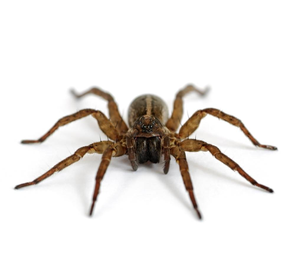 Extreme lengths: Woman sets towel on fire to kill spider (Picture: File)