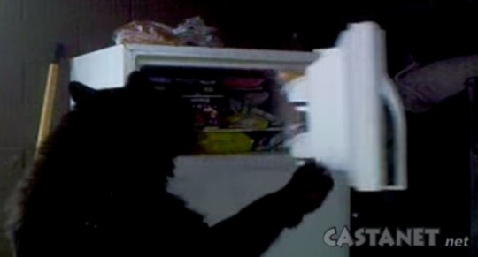 Bear opens freezer door like a human (Picture: YouTube)