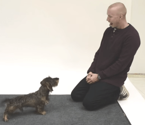 Barking mad experiment: See what happens when humans bark at dogs