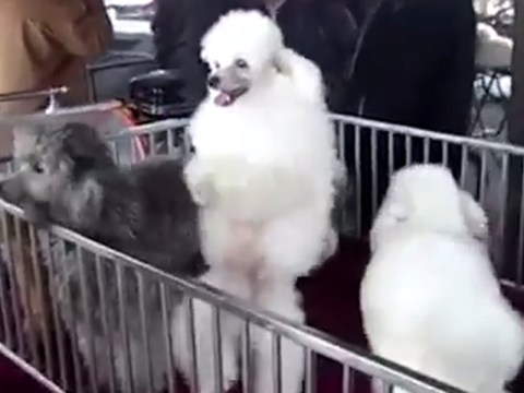 Nothing to see here… Just a bunch of animals 'dancing' to Salt-N-Pepa's Push It