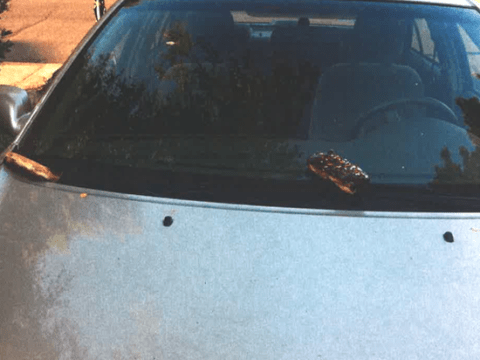 The curious case of the bakery bandits: Oregon vandals smear cars with pastries