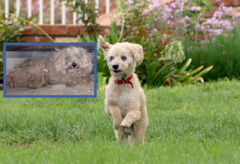 Offers flooding in to adopt Woody the basement dog after incredible transformation