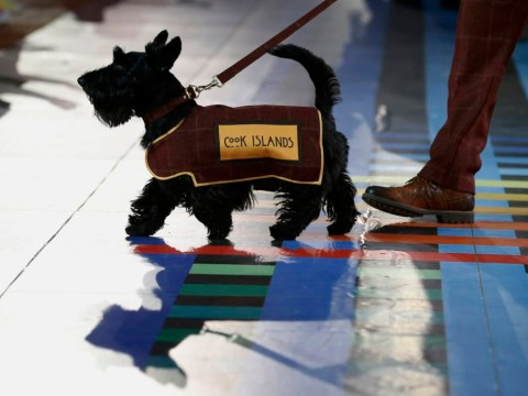 How adorable Scottish terriers stole the show at Glasgow 2014 opening ceremony