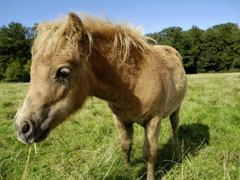 10 things only horse lovers understand