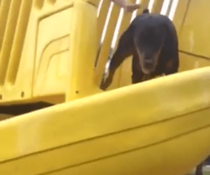 Anarchist dog jumps into owner's face after being forced down slide