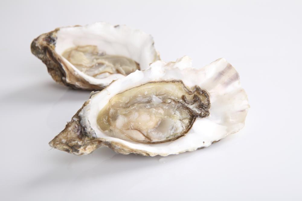 oyster isolated in white background piyato/piyato