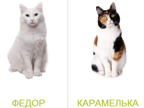 Russian bank offers 'free cat with every mortgage'