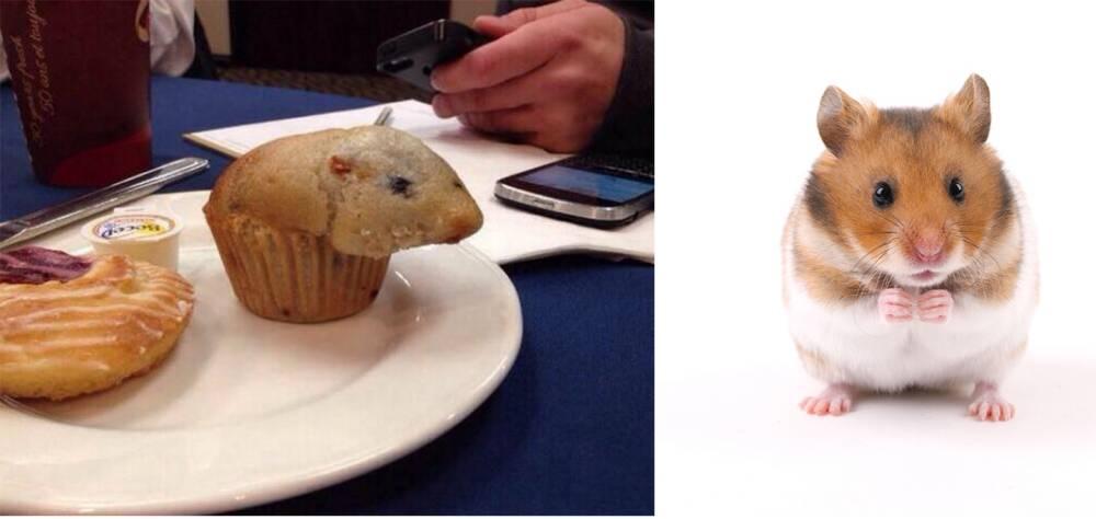 Hamster muffin, reddit