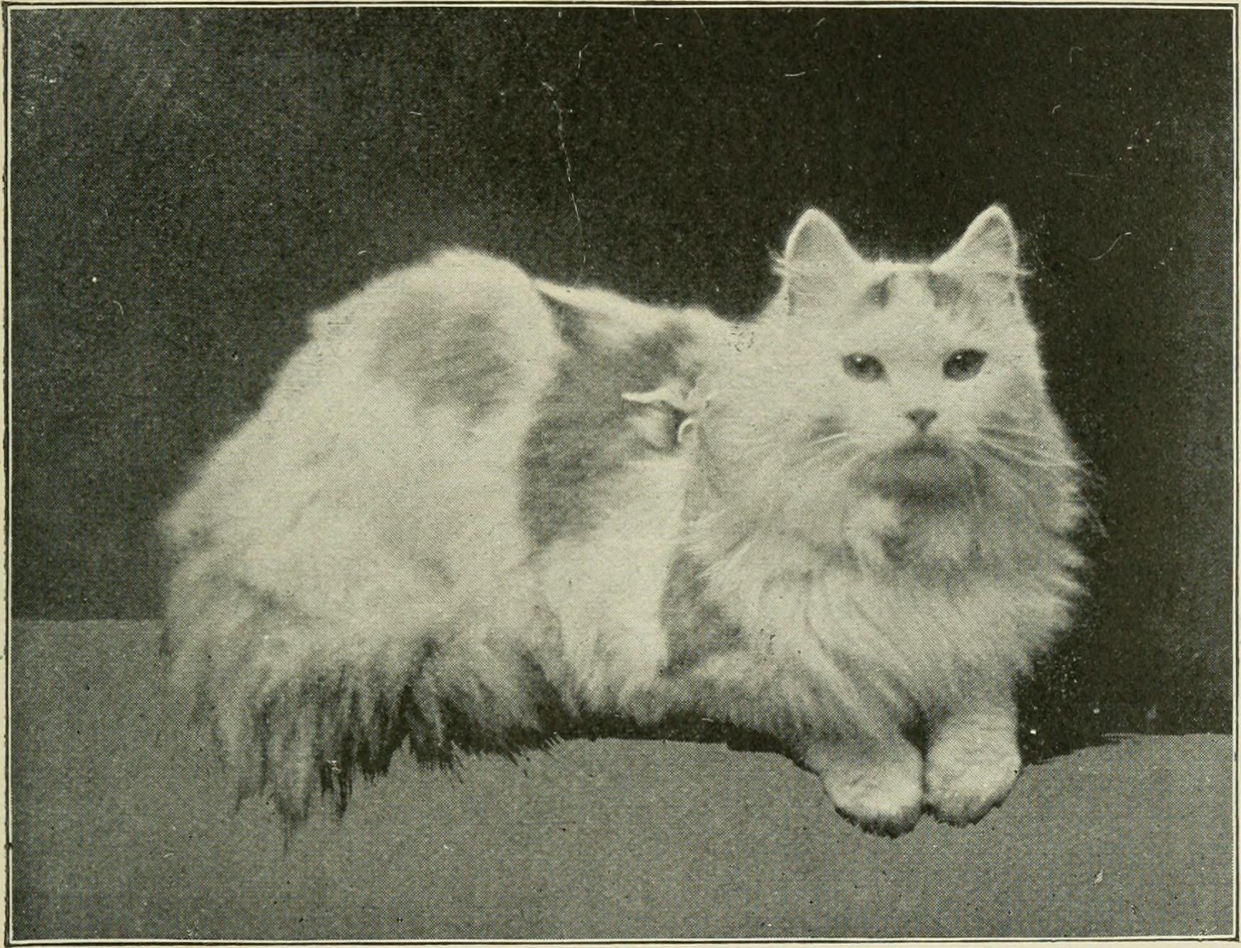 Cats, Funny cats, Sad cats, Vintage cats, Famous cats, Grumpy cat
