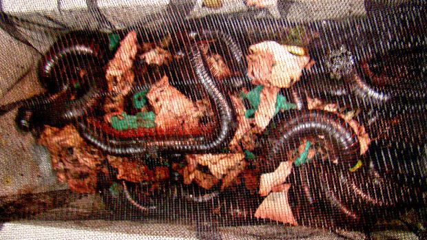20 foot-long giant millipedes seized at San Francisco airport
