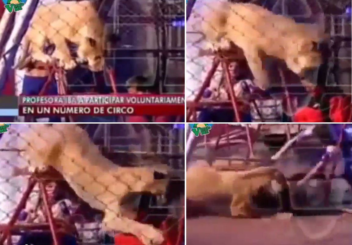 Lion attacks teacher during circus performance as students watch in horror