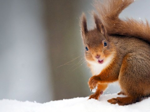Wildlife experts appeal to public after under-threat red squirrels are hit by leprosy outbreak