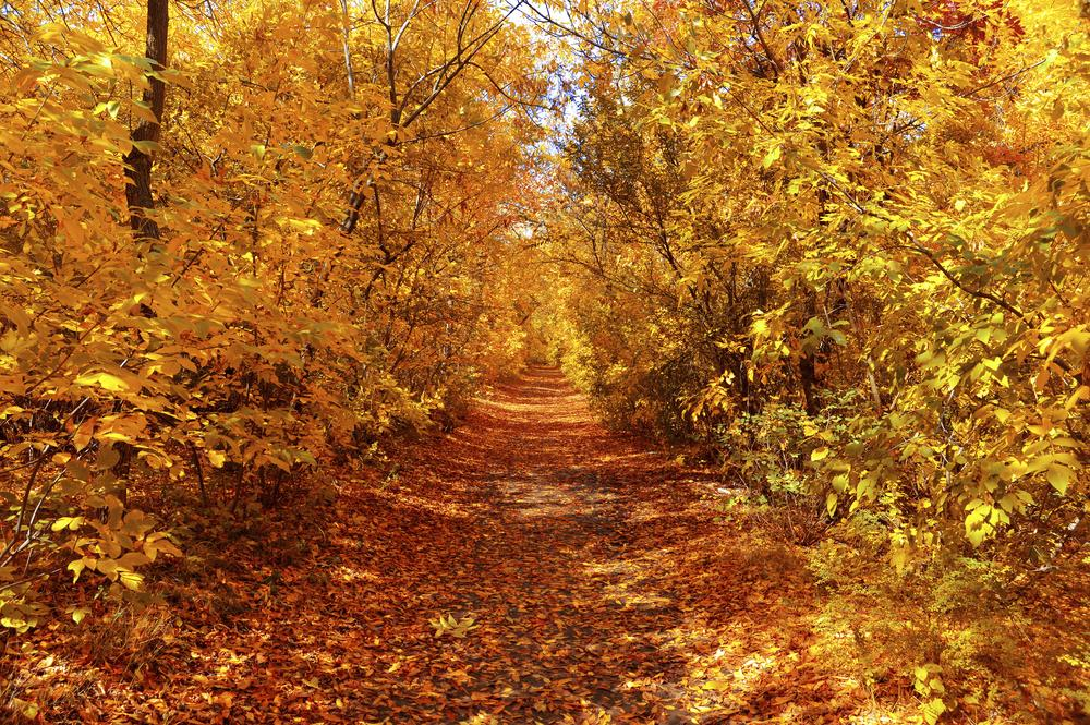 23 things we miss about autumn now we're old (growing up sucks)