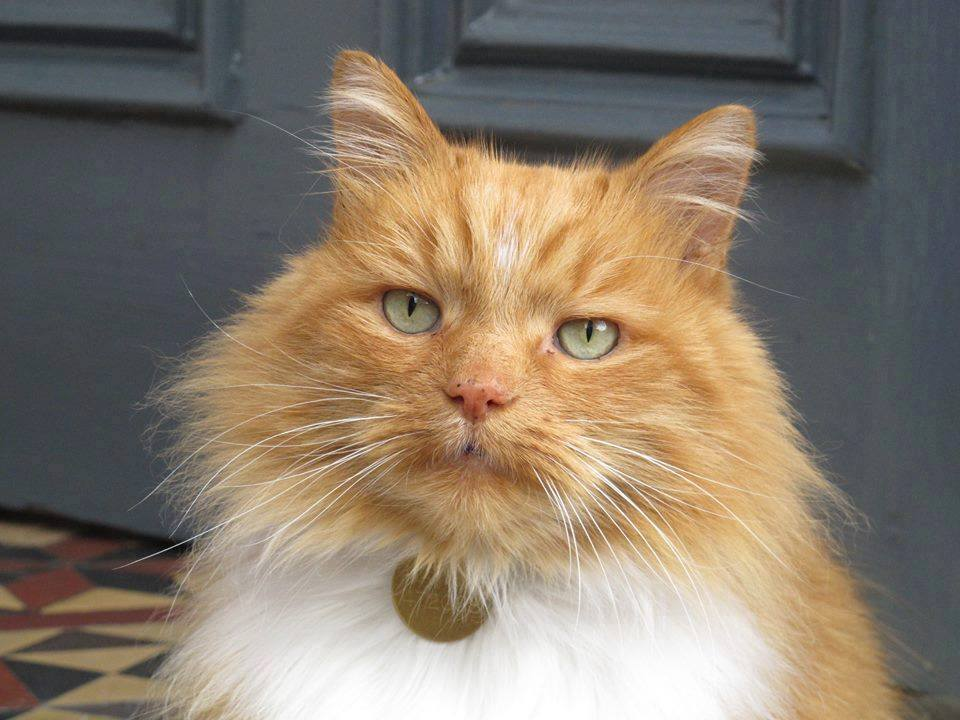 Hamish McHamish: St Andrew's beloved town cat passes away