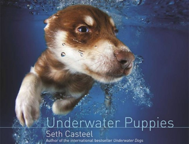 Underwater Dogs book, Dogs swimming, Dogs book, Dogs, Puppies, Pictures of dogs, Puppies swimming, Animal pictures, underwater pictures, Seth Casteel