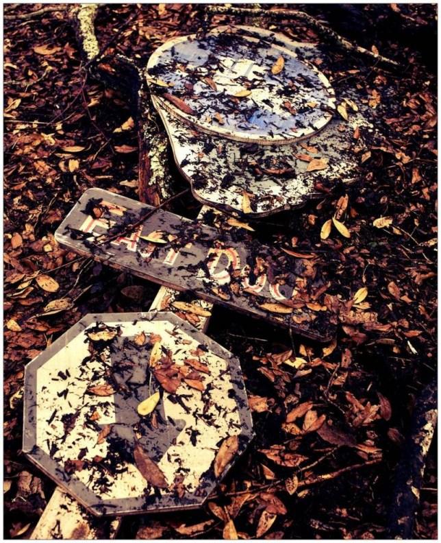 Autumn. pic.twitter.com/rbWVJHDtmy Credit: Colin Trevorrow @colintrevorrow / Twitter