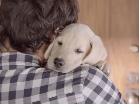This anti drink-drive campaign will definitely make you think twice (because it has a dog in it)