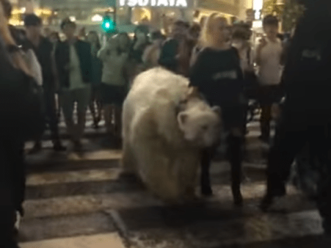Why is there a 'polar bear' on a zebra crossing in Tokyo?