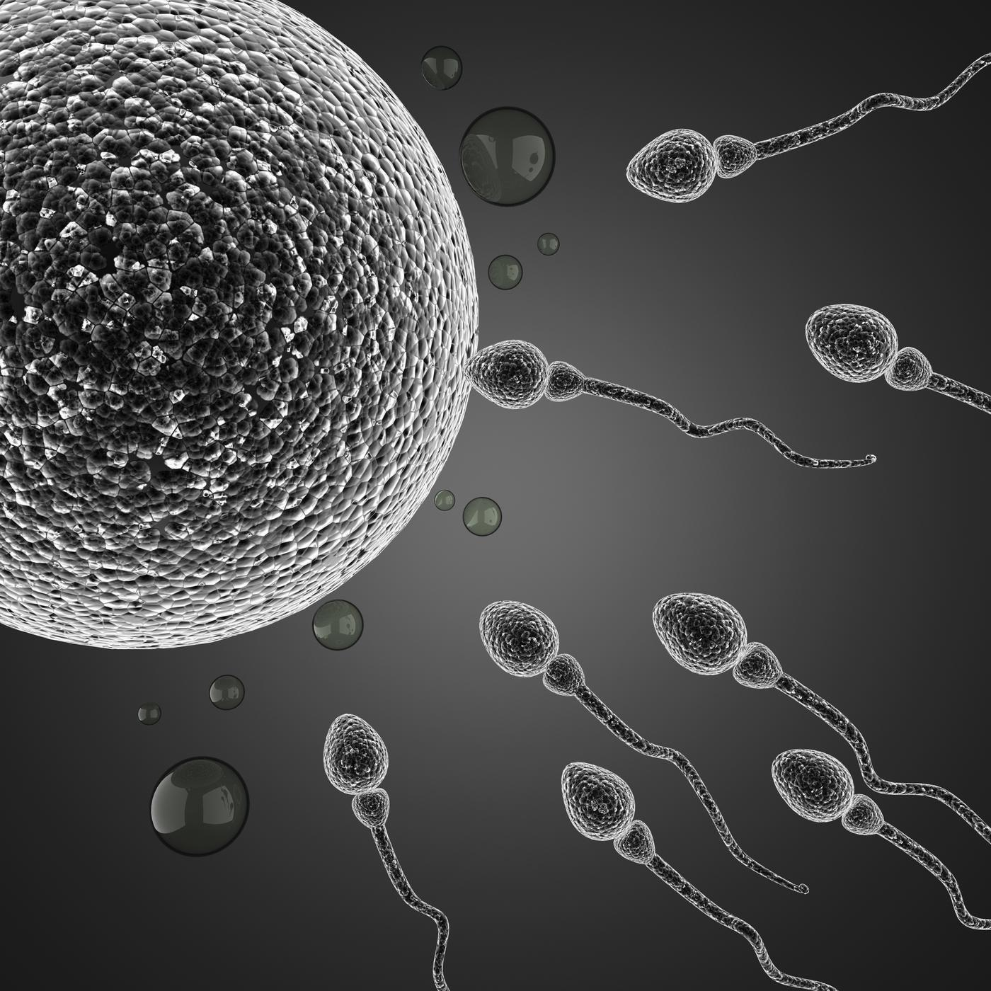 Time for men to ditch the soy as study reveals a vegetarian diet lowers sperm count