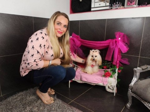 Britain's most pampered pooch: Owner spends £30,000 on treats and luxuries for spoilt lap dog