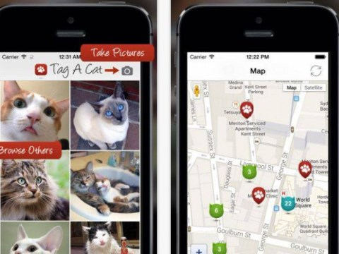 Tag A Cat, which is basically just cat Tinder, is the app we've all secretly been waiting for