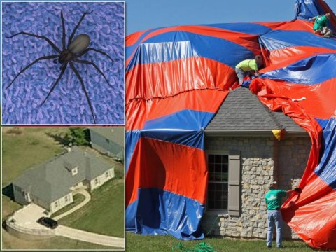 Attack of the spiders: Family flees home infested with 6,000 venomous arachnids