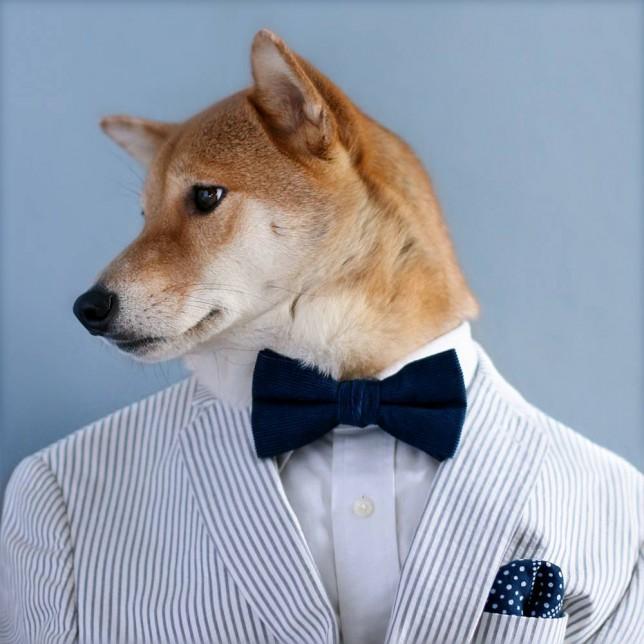 Bodhi the dog, Bodhi the model dog, Bodhi the menswear dog, Menswear dog blog, Dog wearing mens clothes, Dogs in fancy dress, Fancy dress for dogs, Shiba Inu dog, Dave Fung, Yena Kim