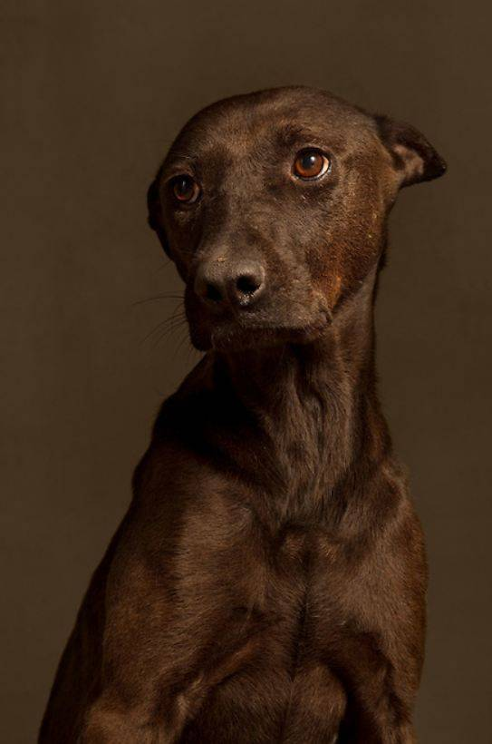 Powerful Photo Series Pictures Dogs On The Day They Were Put Down