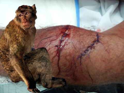 British man given 40 stitches after mauling by Gibraltar Ape