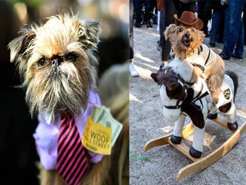 From Game Of Thrones to Breaking Bad: These 9 dogs have got their Halloween costumes spot on