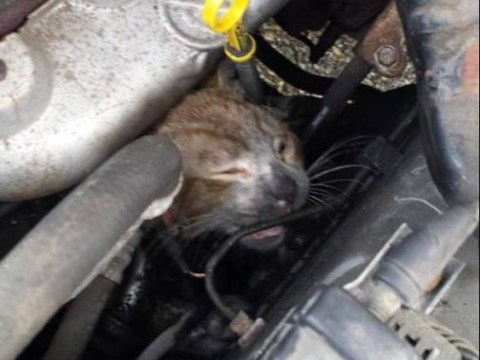 Mr Biscuits the kitten escapes death after getting caught in car engine and possibly catching fire