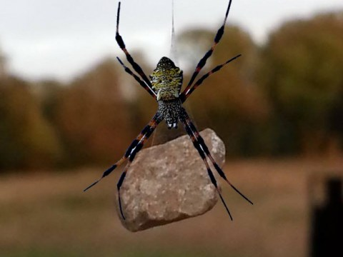 Watch out humankind – spiders have reached the stone age