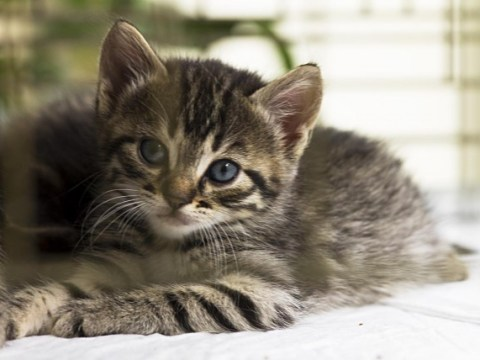 There's a real UK job advert looking for people to cuddle kittens