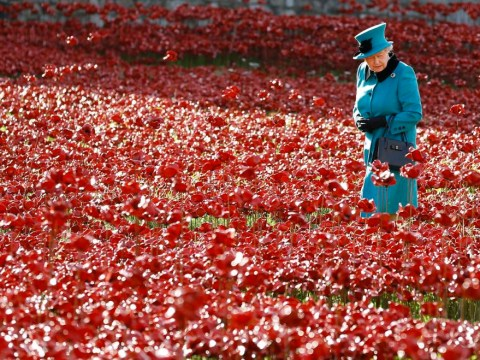 Red ceramic poppies at Tower of London could remain after e-petition started