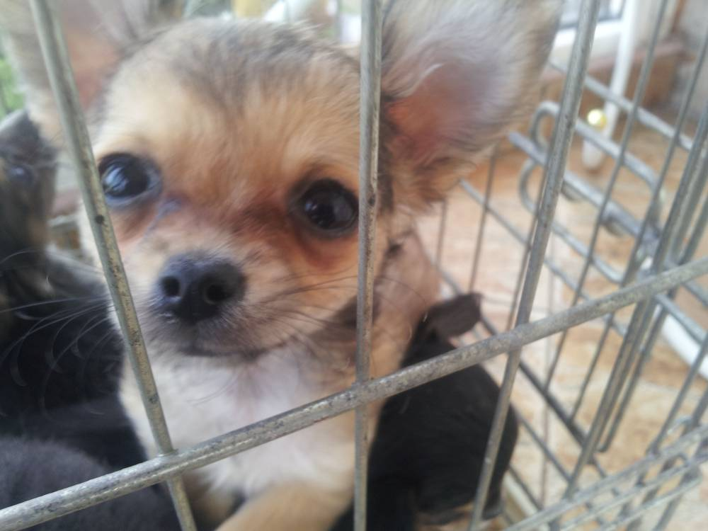 Thousands of puppies are illegally transported to Britain in squalid conditions