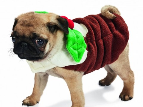 Forget your halls, it's all about decking your pets for Christmas 2014