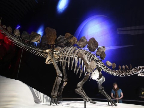 New dinosaur welcomed at London's Natural History Museum