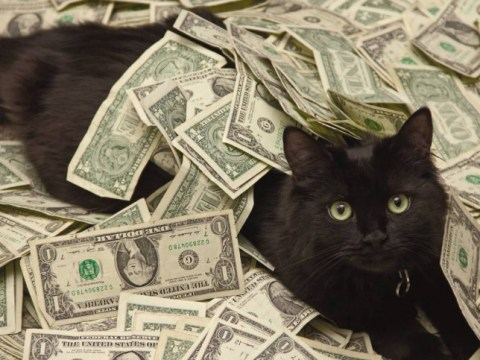 The 'cash cats' are living the VIP lifestyle of your dreams
