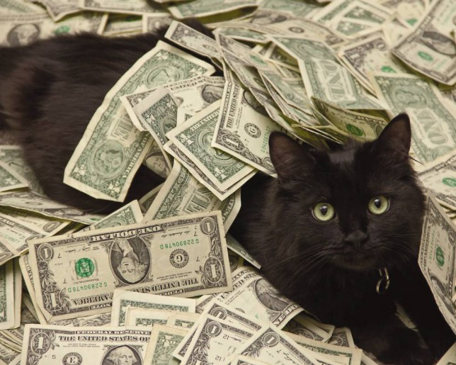 """PAID FOR, DON'T USE AGAIN!!!! ***EXCLUSIVE*** ***STRICT ONLINE EMBARGO UNTIL 00.01hrs 27th December 2014*** UNSPECIFIED - UNDATED: A black """"cashcat"""" is partially buried in a pile of dollar bills. THESE cats are living the high life - surrounded by bundles of $100 bills, luxury champagne and firearms. The VIP felines are the stars of Cashcats.biz, where high net worth individuals post pictures of their beloved pets surrounded by the trappings of their wealth. The crowdsourced website is the brainchild of Brooklyn-based digital marketer Will Zweigart, who has received submissions from every continent except Antarctica. The high-rolling kitties have featured in their own art exhibition and are the stars of a new calendar to raise money for animal rescue charity Cat Town Oakland. For more Cashcats, visit http://instagram.com/cashcats or purchase their 2015 calendar at http://cashcats.biz/shop PHOTOGRAPH BY Cashcats / Barcroft Media UK Office, London. T +44 845 370 2233 W www.barcroftmedia.com USA Office, New York City. T +1 212 796 2458 W www.barcroftusa.com Indian Office, Delhi. T +91 11 4053 2429 W www.barcroftindia.com"""