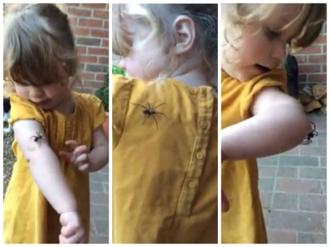 Little girl is braver than you when it comes to spiders
