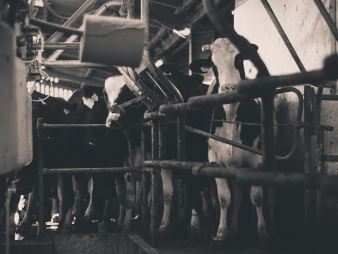 British dairy farm crisis: Is it time for Fairtrade milk in the UK?