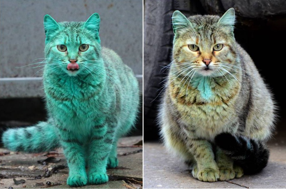 Green cat finally gets washed